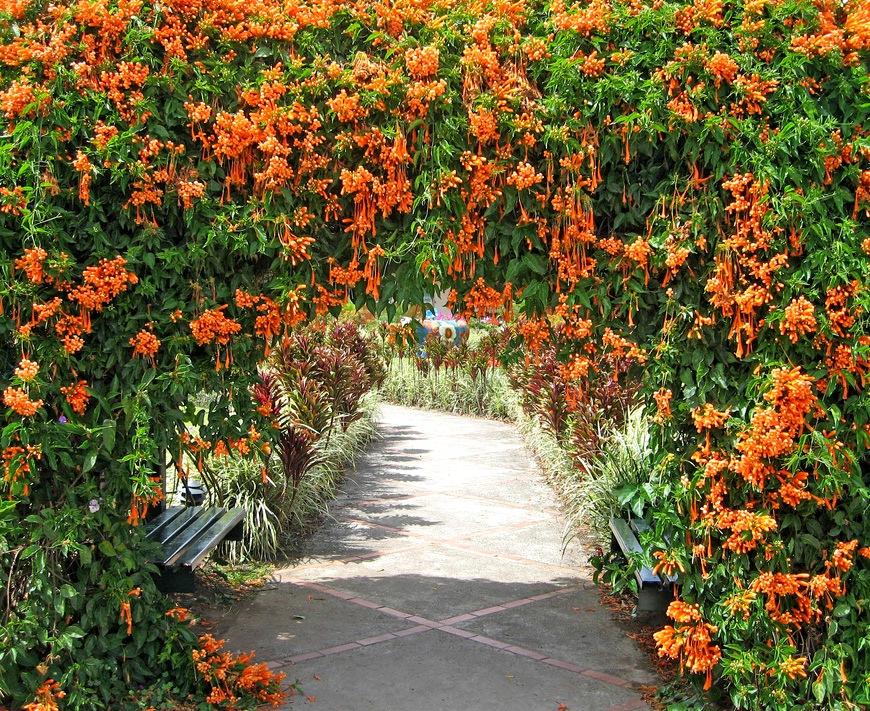 Вьющиеся растения в саду